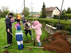 Příspěvky na obnovu alejí nabízí obcím a městům do konce ledna Nadace ČEZ.