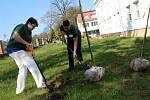 Před městeckou nemocnicí vysázeli deset nových stromků.