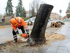 Lipová alej kolem silnice směřující ke hřbitovu v Nymburce se stává minulostí. V pátek zaměstnanci technických služeb pokáceli prvních pět stromů. Další tři půjdou k zemi v příštím týdnu.