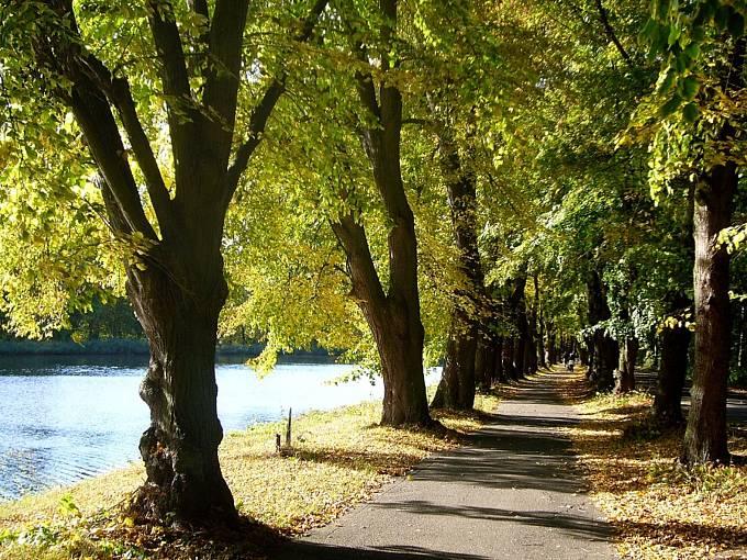 Stromořadí u Skupice je nejkrásnější v kraji.