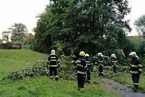 Spadlý strom u Katovny.