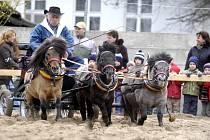 Návštěvníci lyského výstaviště se mohou už od středy těšit na výstavy Zemědělec a Jaro s koňmi.