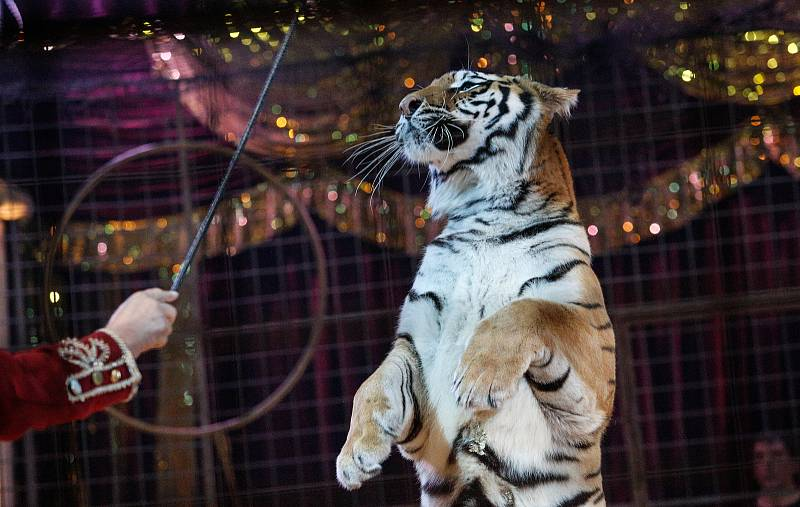 Z vystoupení národního cirkuss Jo-joo s turném Strojčasu v Pardubicích v listopadu 2019.