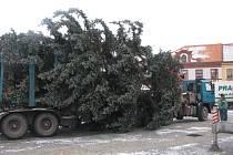 Na nymburském náměstí vyrostl zase po roce vánoční strom