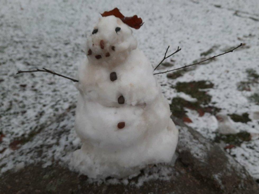 Sněhuláček hřišťový, 6. ledna 2021.