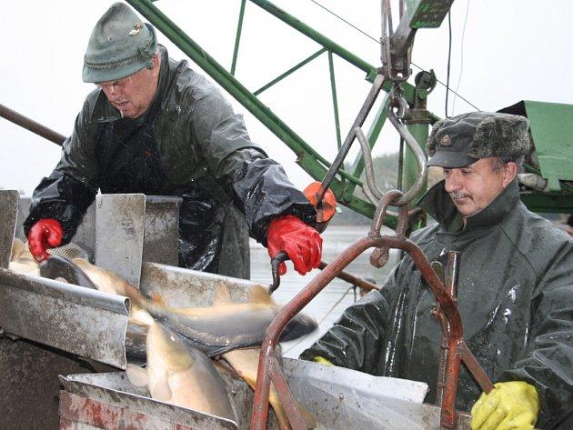 Výlov Žehuňského rybníka začal, už nyní mají rybáři odlovené stovky metráků ryb.