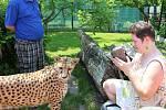 Gepardice Mzuri byla jednou z hlavních atrakcí oslav 20 let od založení chlebské zoo.