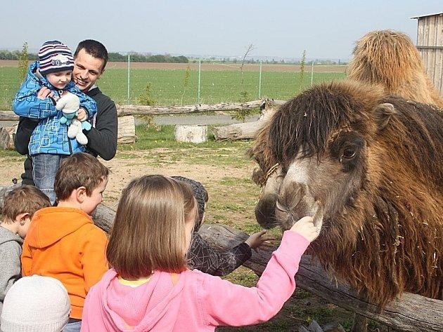 V zoo otevřeli nové hřiště, velbloudinec a environmentální centrum.