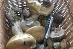 Fotografie svých houbařských úlovků nám poslal Štěpán Podsklan.