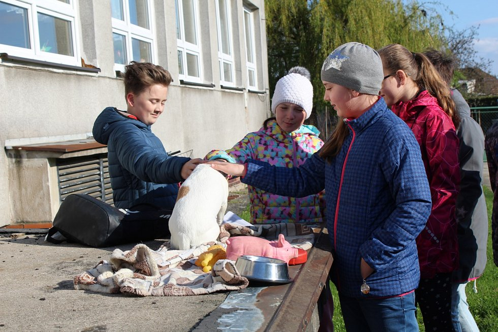 DEN ZEMĚ na Základní škole Letců R.A.F. byl letos zasvěcen zvířecím přátelům člověka.