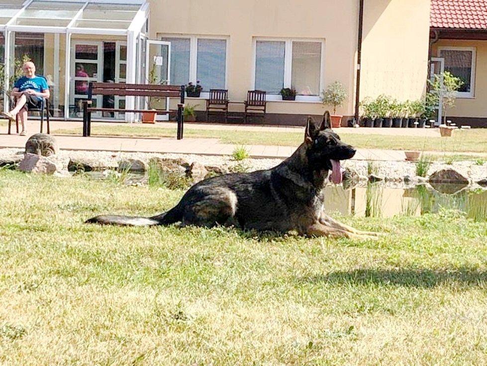 Ukázka policejního psovoda zaujala v Senior parku v Sokolči.