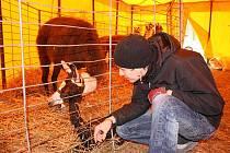 V cirkusu Jo Joo se narodila malá lama