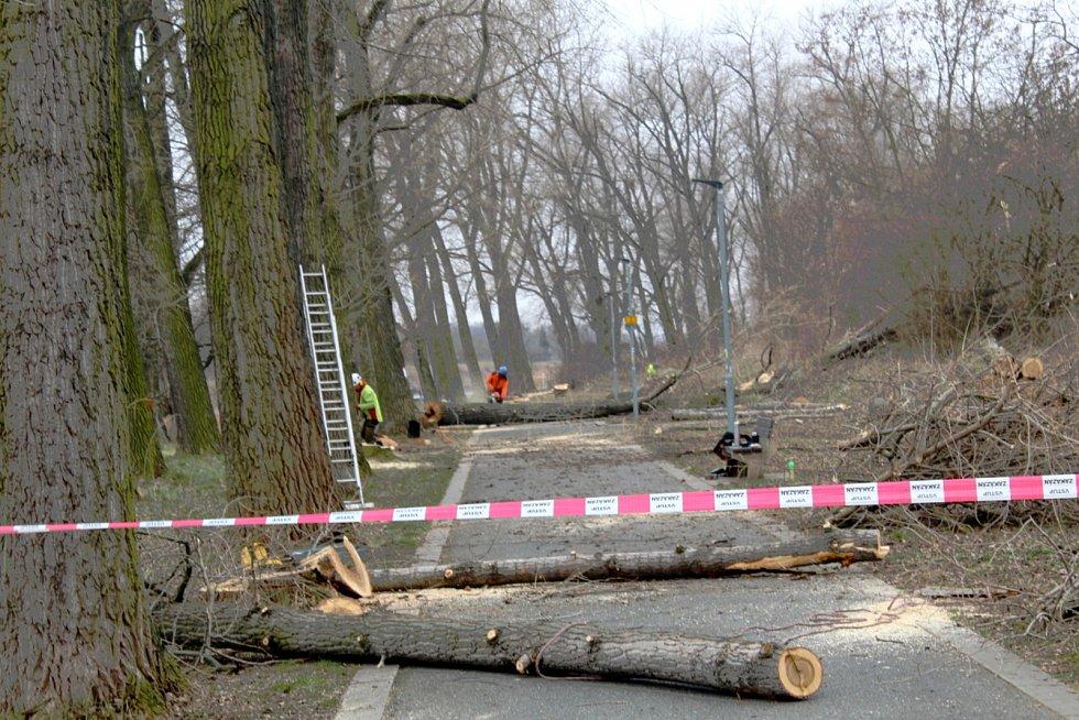 Do konce měsíce bude kvůli kácení topolů uzavřená část cyklostezky za železničním mostem.