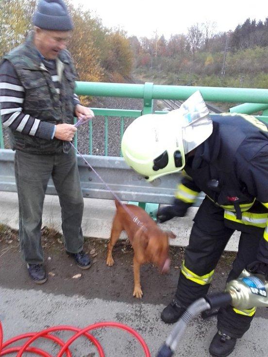 Záchrana psa ze železného zábradlí.