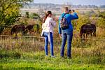 Na výlet je možné vyrazit do milovické rezervace s divokými koňmi.