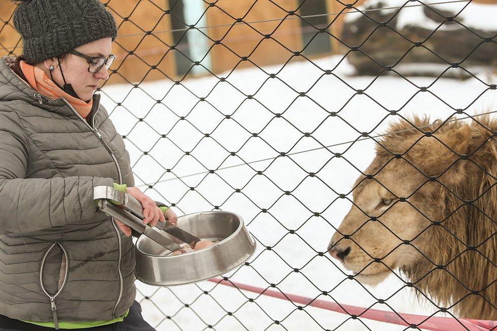 Zoo v Chlebech na Nymbursku ve středu 17. února 2021.