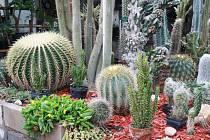 Sukulenty v Zahradě Bittman v Dymokurech