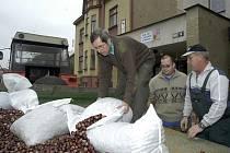Děti nasbíraly tři tuny kaštanů