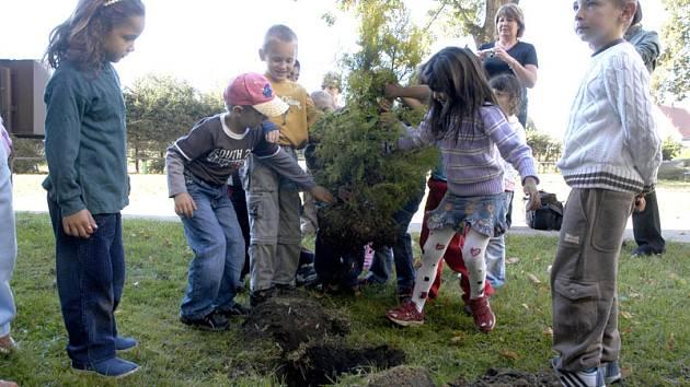 Školáci v Rožďalovicích vysadili u školy další stromek.