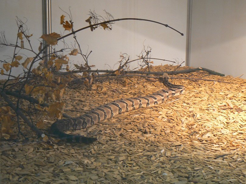 Z jednoho z předchozích ročníků výstavy Exotika na lyském výstavišti.