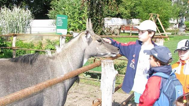Malí táborníci si v chlebské zoo pohladili exotického nilgau