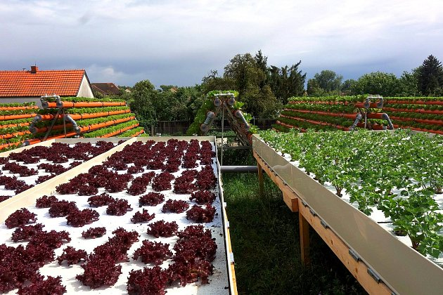 Saláty a další výpěstky v biokvalitě chce dodávat farma nemocnici a dalším organizacím zdarma.