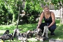 Na dvorku v Křečkově se batolí 13 malých malamutů