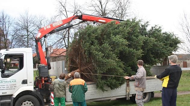 Cesta vánočního stromu v Kostelní Lhotě.