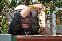 V Poděbradech otevřeli včelaři úly.