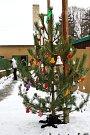 VÁNOČNÍ strom mají pejsci v lyském útulku tradičně a lidé jim pod něj nosí na Štědrý den dárky. Připojte se letos i vy! Třeba pod vánočním stromem najdete svůj dáreček pro někoho blízkého v podobě psího kamaráda.