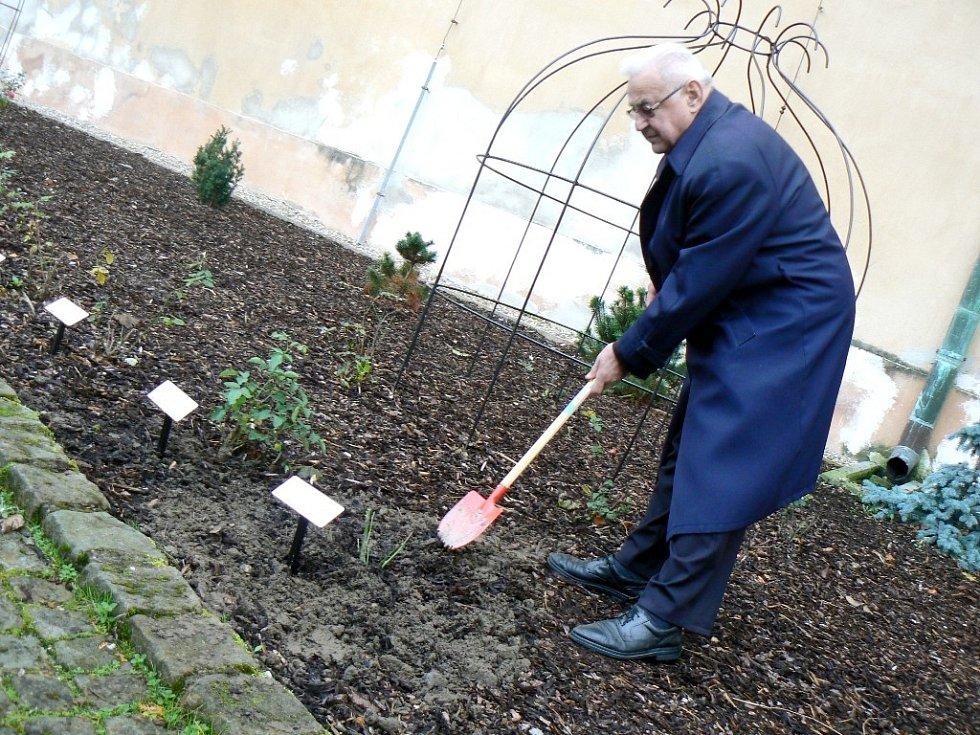 RŮŽE Miloslava Kardinála Vlka pokvete vedle růže Karla Schwarzenberga v poděbradském rozáriu.
