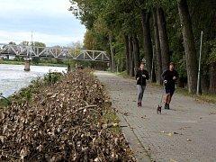 Odborná firma prořezala více než stovku topolů podél cyklostezky u Labe v Nymburce.