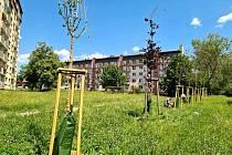 Po Nymburce a Poděbradech zkouší novou technologii při sázení stromů také v Milovicích.
