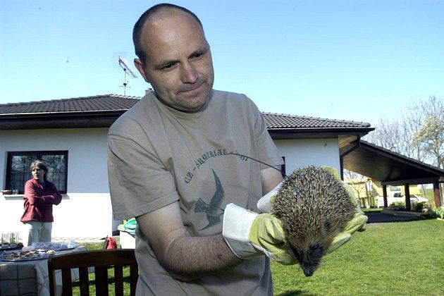 Luboš Vaněk ukazuje ježka, kterého vypouští do přírody s vysílačkou.