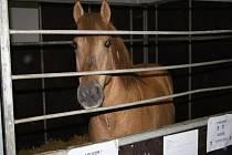 Výstava Kůň 2012 v Lysé nad Labem