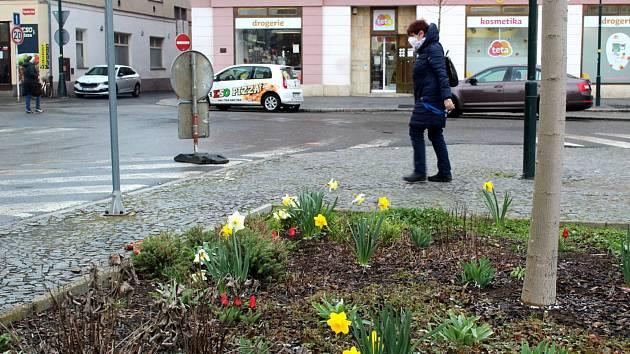 Jarní květiny v centru Nymburka.