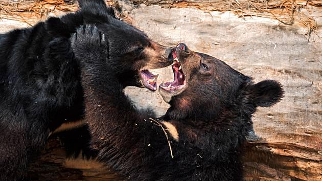 Chlebská Zoo má nejlepší medvědinec.
