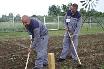 Vězni v Jiřicích sadaří a včelaří