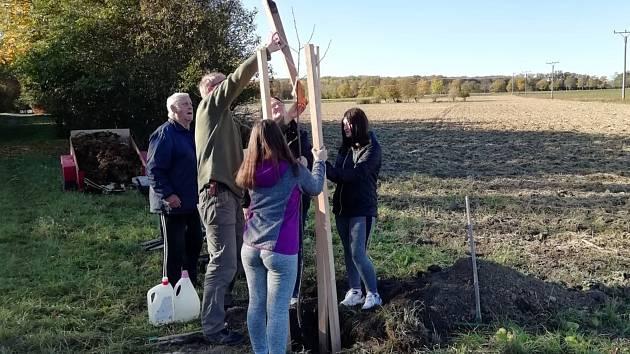 Místní vysadili na Jiráskově stezce 10 nových stromů a ještě tento měsíc v tom budou pokračovat.
