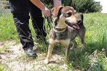 Menší hnědočerný kříženec byl nalezen 21. května 2013 v Pražské ulici. Jedná se o bojácného ale hodného psa.