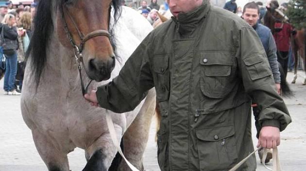 Na výstavě Jaro s koňmi v Lysé nad Labem se představili koně mnoha plemen.
