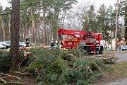 Mohutný strom spadl v policejním školícím středisku v Sadské. Foto: Deník/ Miroslav S. Jilemnický