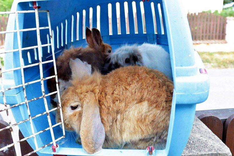Trojice králíčků, které někdo nechal u kontejneru