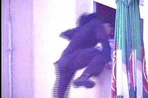 Zloděj na snímcích z městských kamer