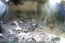 Pohled do jednoho kotců, kde se psi brodí ve výkalech