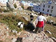 Cestou z kempu do města potkáváme kozy.