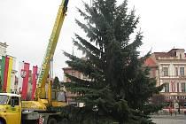 V Nymburce již vtyčili vánoční strom na náměstí. Rozsvítí ho v pátek.