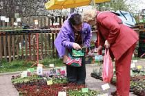 Do neděle 19. dubna jsou na Výstavišti lysá nad Labem k vidění výstavy Narcis, Elegance a Regiony.