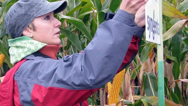 Na poli u Slovče se konal Polní den, na kterém zemědělci hodnotili výnosy modifikovaných kukuřic.
