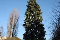 Vánoční strom v Lysé